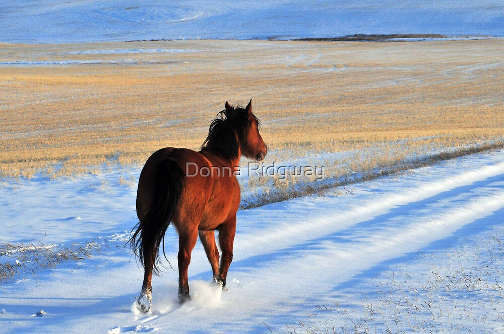 Snow Boogie by Donna Ridgway