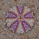 Coelopleurus exquisitus Sea Urchin by MicrocosmFilm