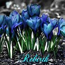 Spring Rebirth - Text by Shelley Neff
