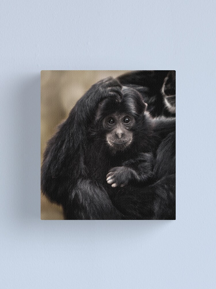 Alternate view of Siamang Canvas Print