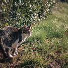 Cat Photo 1 - Kali by Frost Design