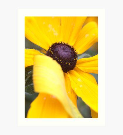 Sunny Folded Petal Art Print