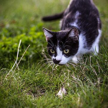 Cat Photo  2 - Sigrun by LFimM3