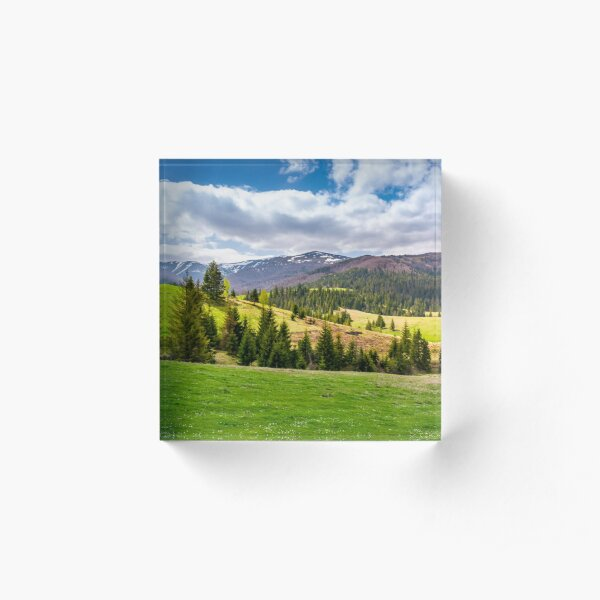 spruce trees on grassy slopes in mountainous area Acrylic Block