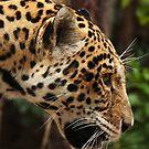 Jaguar Portrait by kernuak