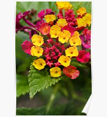 Red and Yellow Tiny Flowers Poster