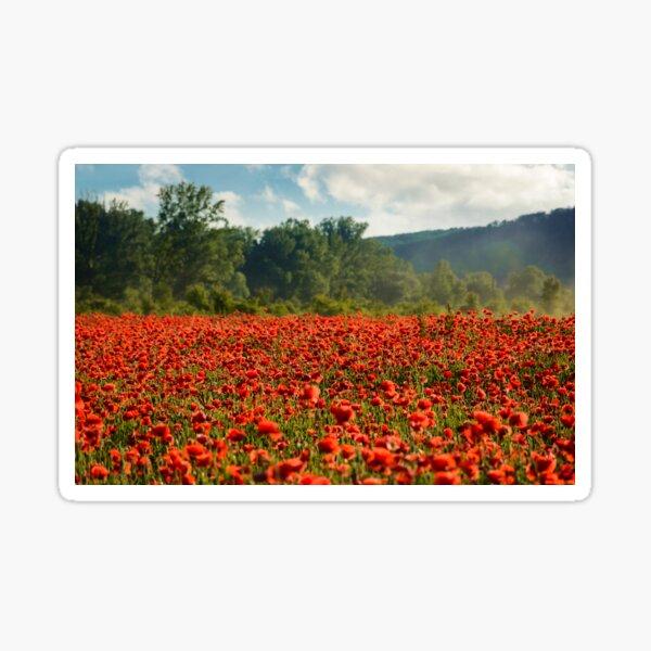 poppy field in summer evening Sticker