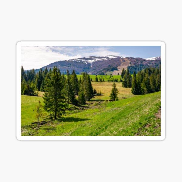 spruce forest on rolling hills in springtime Sticker