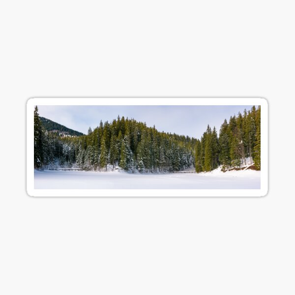 panorama of coniferous forest in winter Sticker