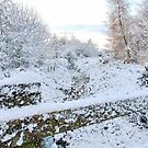 Snow on the Stream by AnnDixon