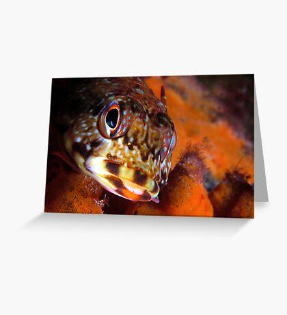 Dragonet Greeting Card