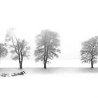 Five Trees ... by Angelika  Vogel