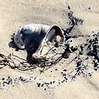 Slipper Limpet........Weymouth Dorset UK by lynn carter