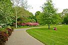 Fairmount Park Azalea Garden - Philadelphia Pennsylvania USA by MotherNature