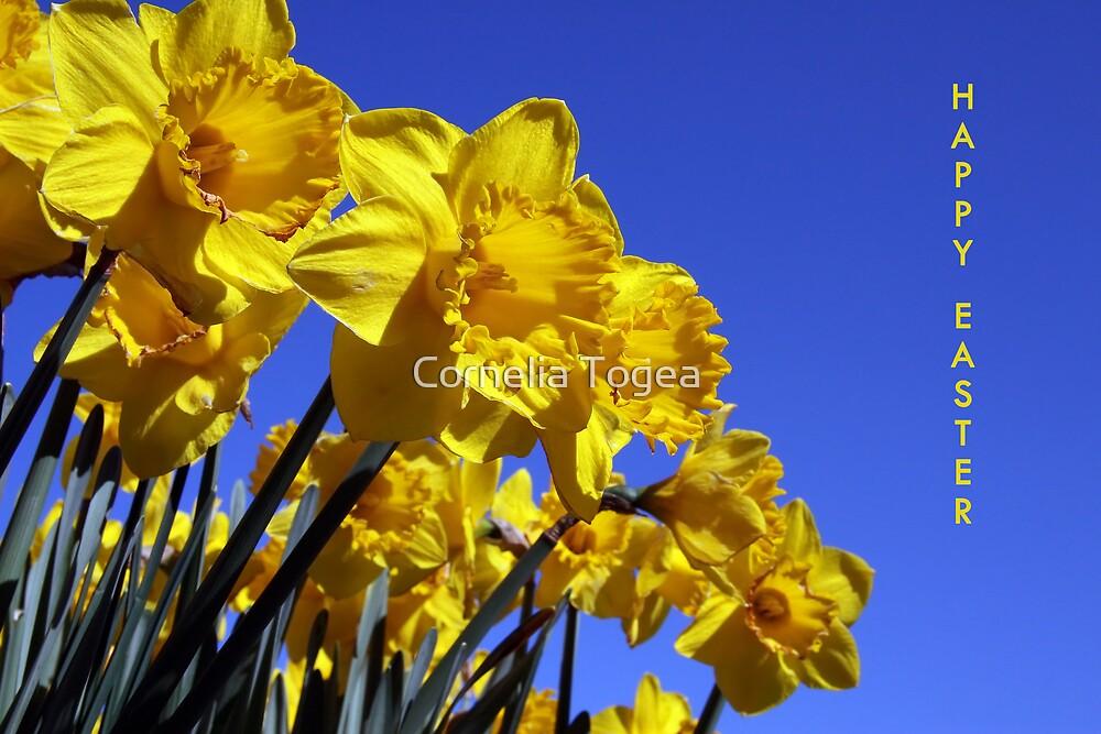 easter daffodils by Cornelia Togea