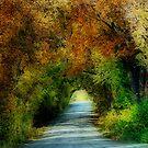 Canopy of Trees by Glenna Walker