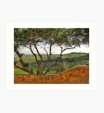 Tree at Saqqajja Steps, Malta Art Print