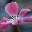 Pink And Playful by Pamela Hubbard