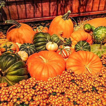 Pumpkins by quackersnaps