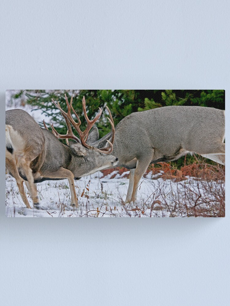Alternate view of Mule Deer Buck Fight 2 Canvas Print