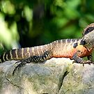 Water Dragon by Richard  Windeyer