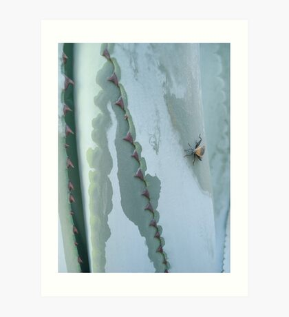 Century Plant and Stinkbug Art Print