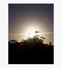 Shining Through Photographic Print
