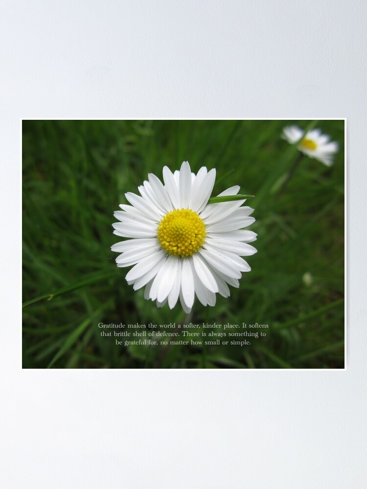 Alternate view of Inspirational Words of Gratitude with Daisy Poster