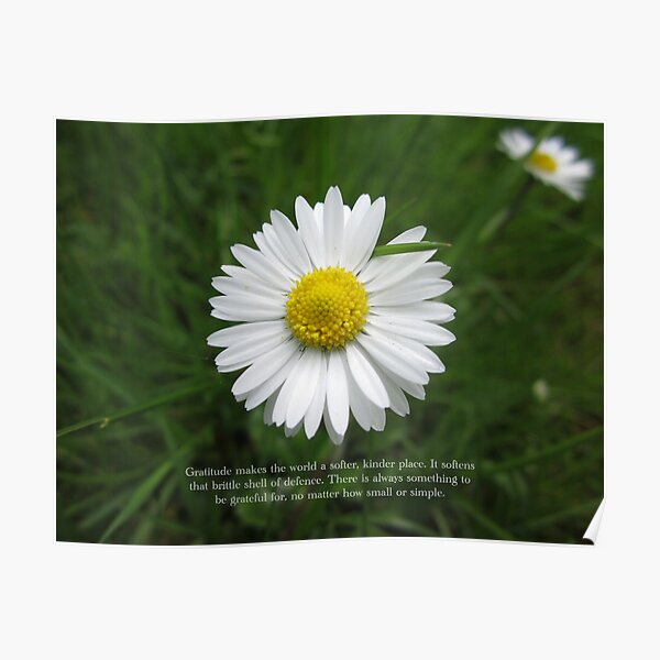 Inspirational Words of Gratitude with Daisy Poster