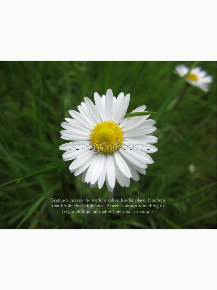 Inspirational Words of Gratitude with Daisy by JaneyColbourne
