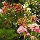 Autumn in the Gum Trees, Wilson Botanical Park, Berwick. by johnrf