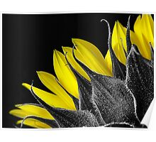 Selective Colour Sunflower Poster