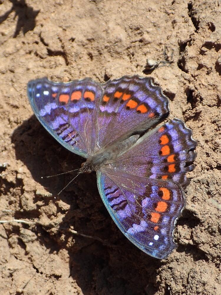 Iridescent butterfly by Steven Boeynaems