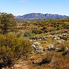 Eastern Face of Wilpena Pound, Flinders Ranges, South Australia.  by johnrf