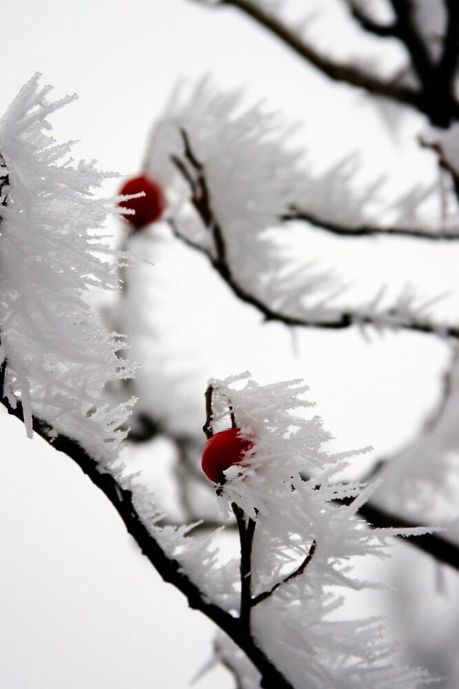Winter 2 by Dóra  Varga Lencsés