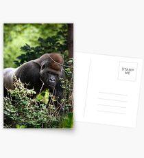 Silverback Postcards
