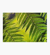 Sunlit fern II Photographic Print