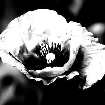 Black Poppy by N-72