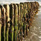 Rosslare sea poles by Michelle Mc Goff