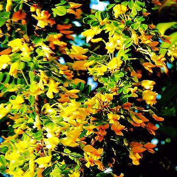 Acacia in Spring by NicoleK-design