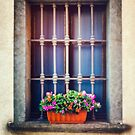 The flowers on the windowsill by Silvia Ganora