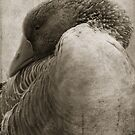 Sepia Goose by Murray Swift