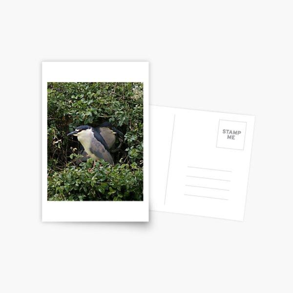 Hidden Postcard