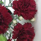 Carnations For Me by pat oubridge