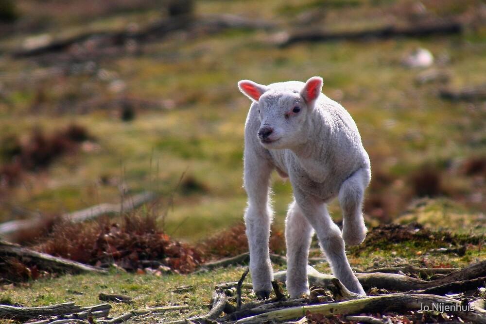 Joy of A Lamb in Spring by Jo Nijenhuis