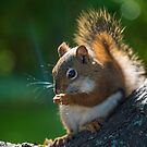 Chunks the Red Squirrel by Brendan Buckley