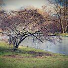 HDR tree by Jakov Cordina