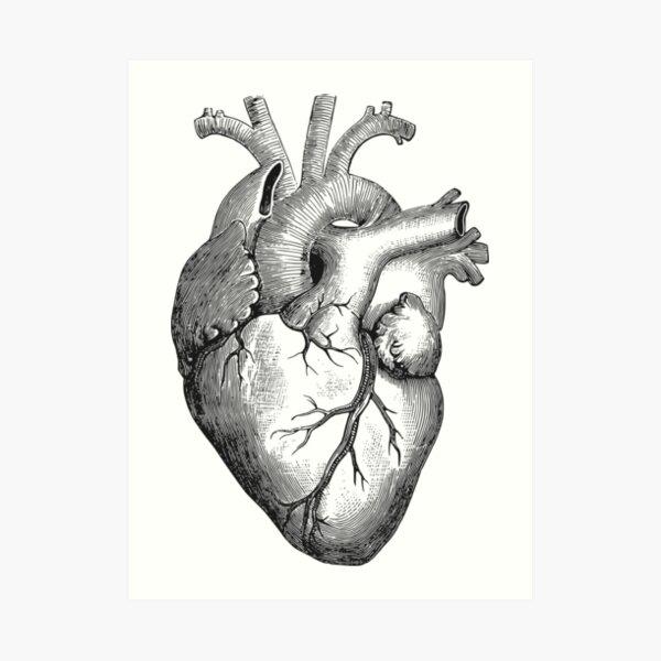 Anatomical heart Art Print