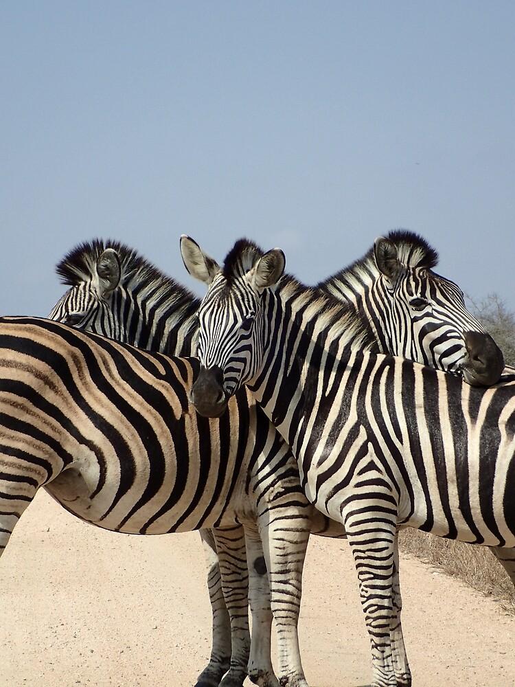 Zebra hugs by Steven Boeynaems