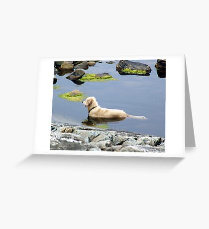 Saul in the Water Greeting Card